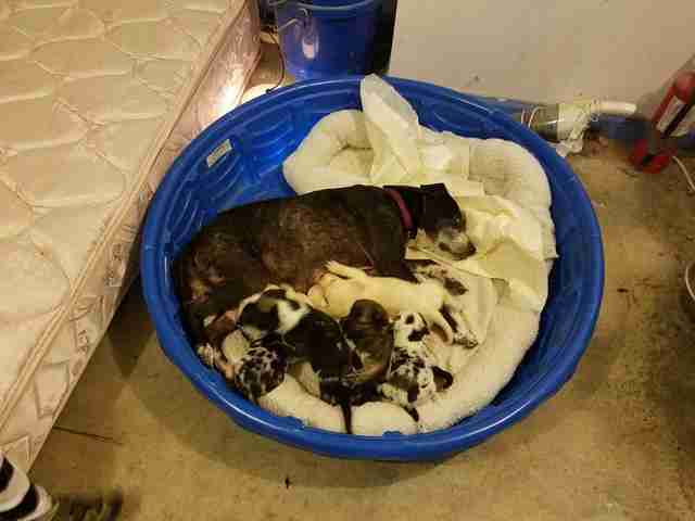 dog and puppies rescued