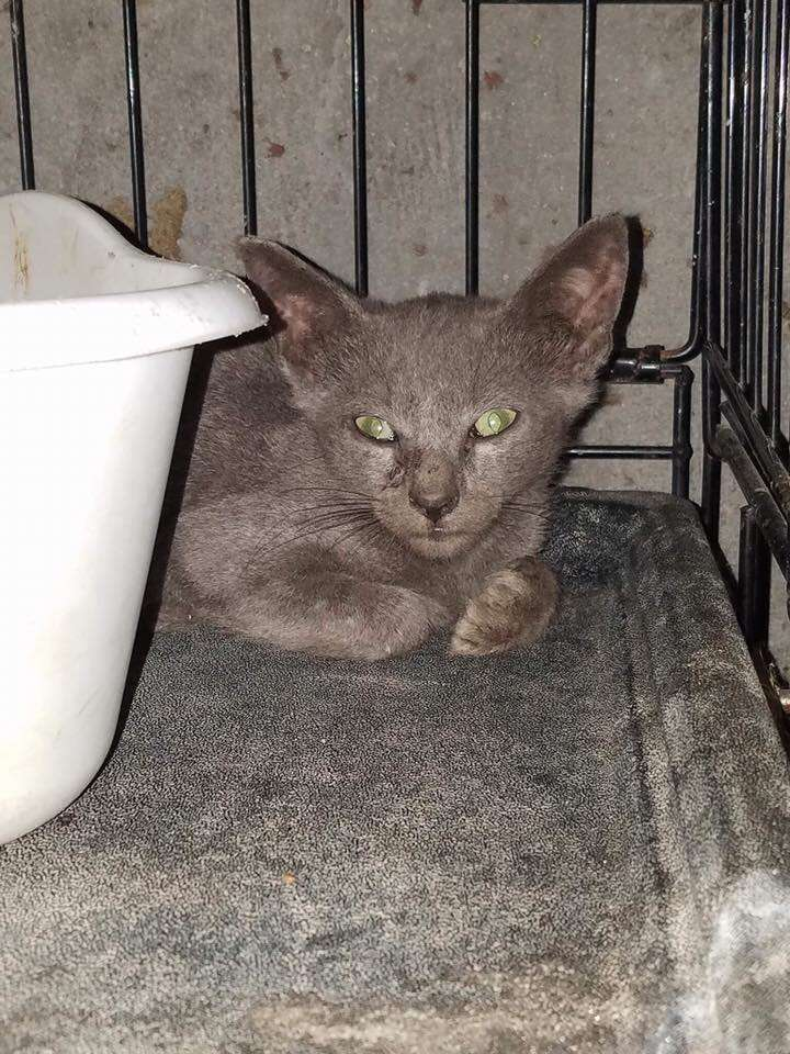 Cat saved from vacant building in Queens, NY