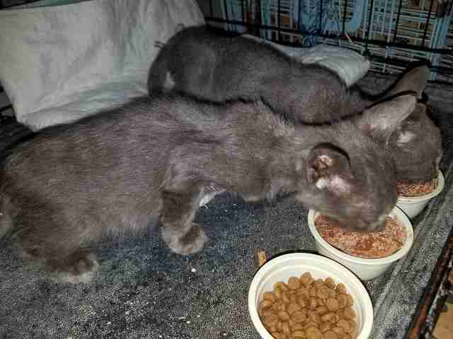 Cats saved from vacant building in Queens, NY