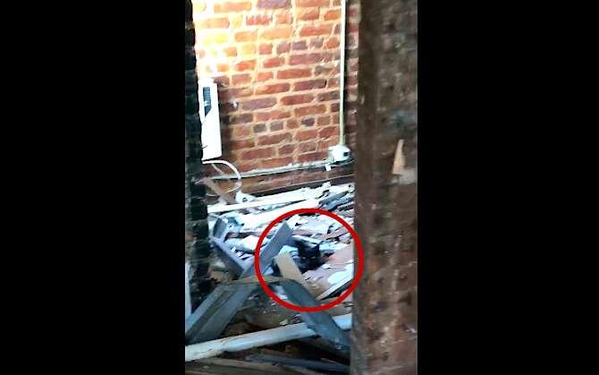 Cat found in Ridgewood, Queens, building
