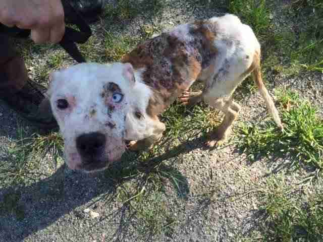 rescue dog with skin condition