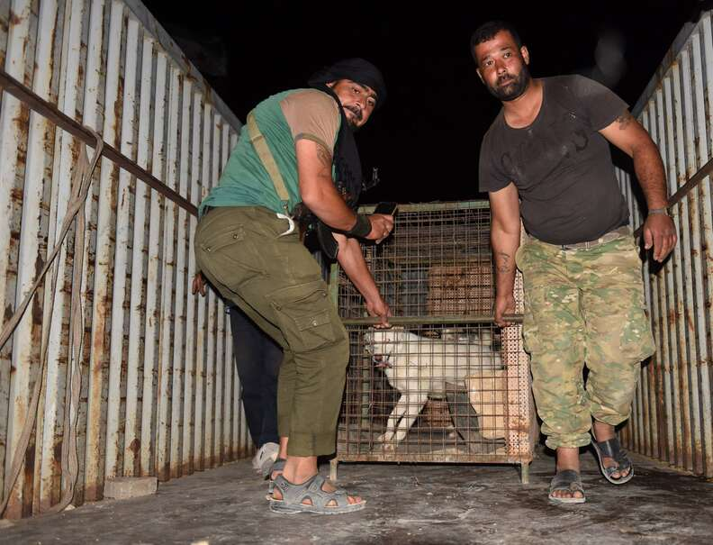 dogs getting saved from war-torn zoo in Aleppo, Syria