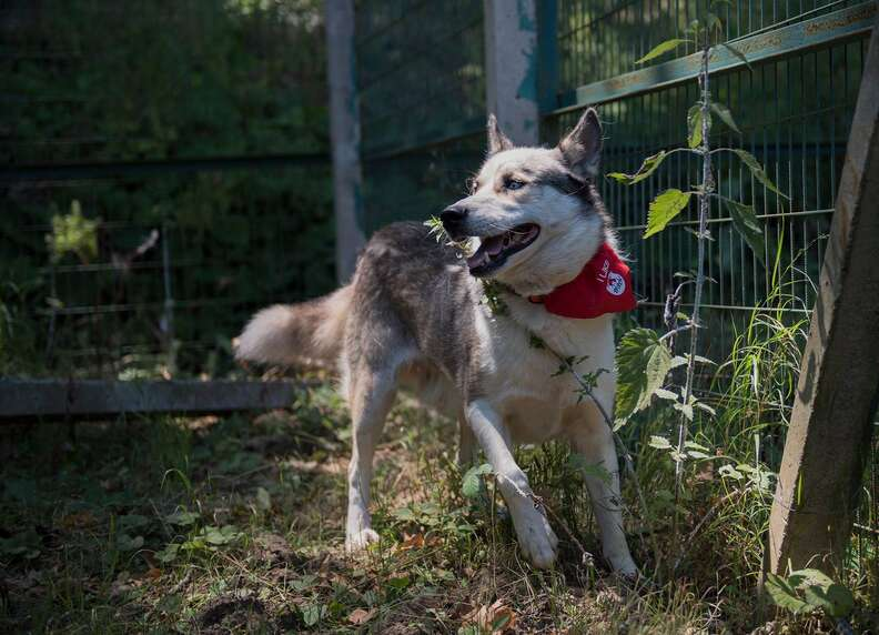 dog rescued from Aleppo zoo