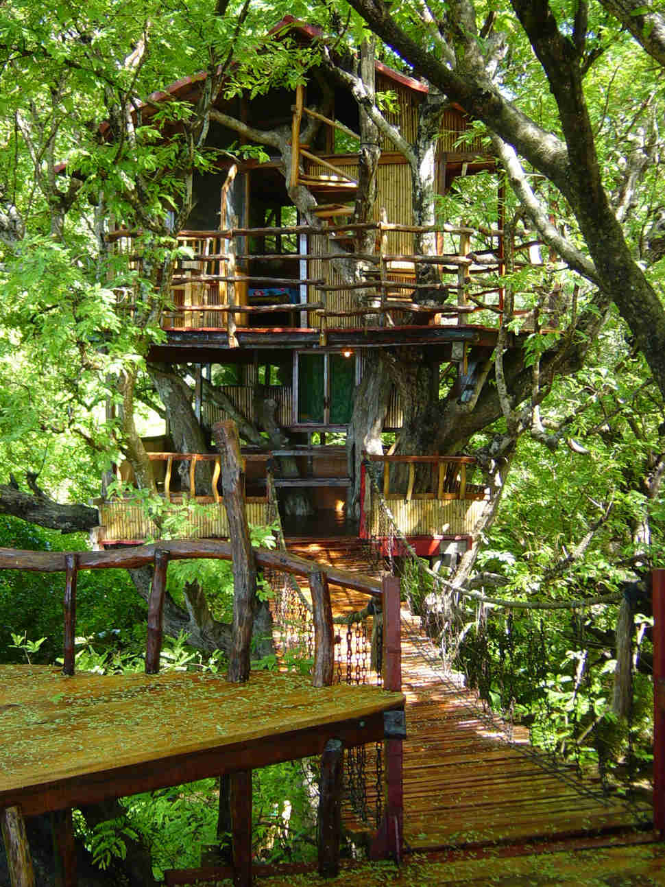 The World's Coolest Treehouse Hotels