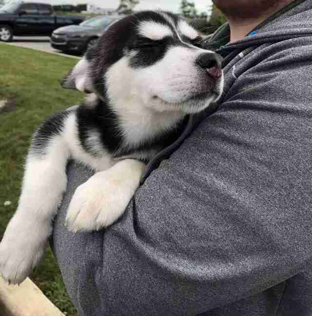 Person holding husky