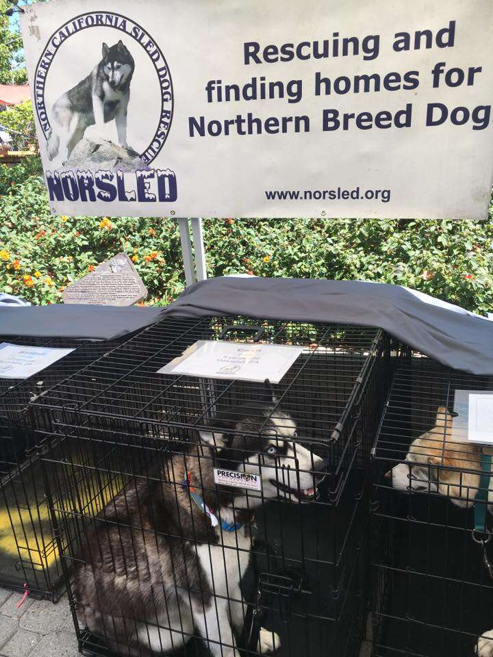 Huskies at adoption event