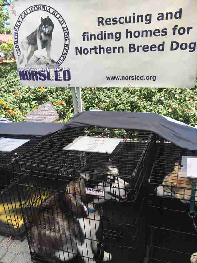 Huskies at adoption event