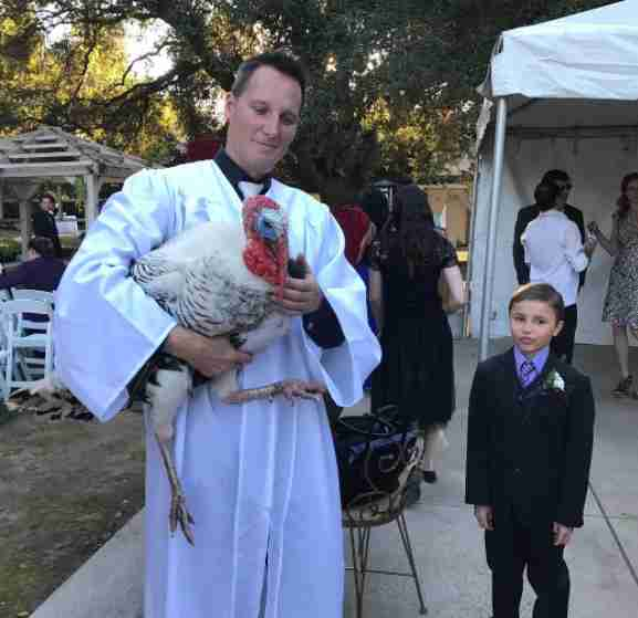 rescue turkey guest of honor at wedding