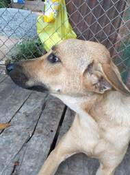 Rescued dog in Cambodia