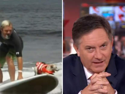 dog surfing news report