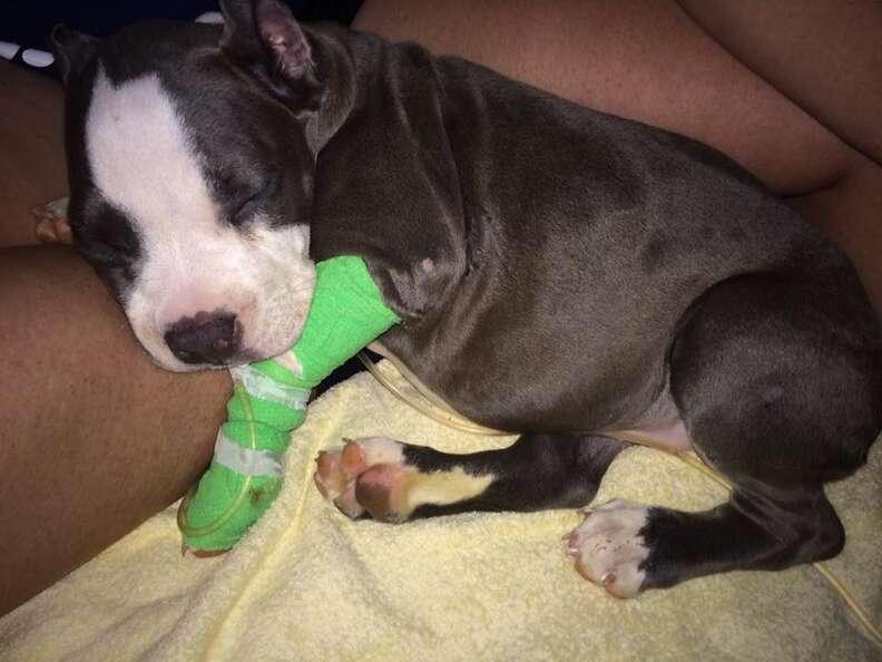 Sick puppy at vet