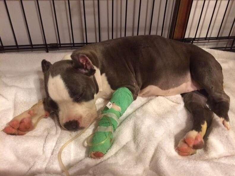 Sick puppy lying down in kennel