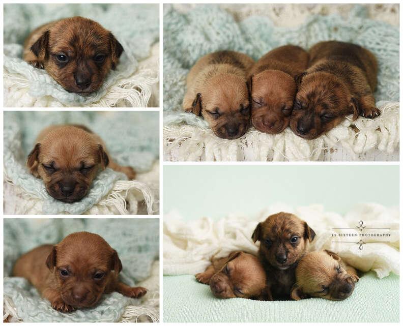 puppy baby photo shoot