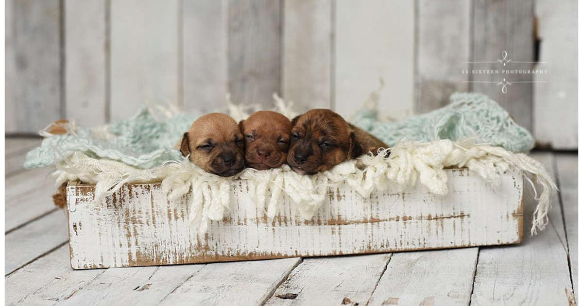 Shelter Puppies Get The Cutest Newborn Photo Shoot