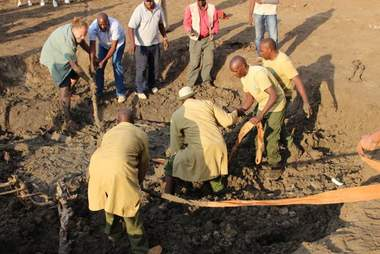 People helping baby elephant stuck in mud