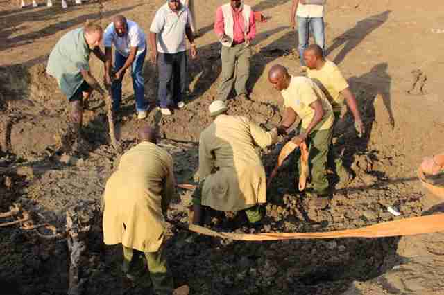 People helping baby elephant stuck in mud