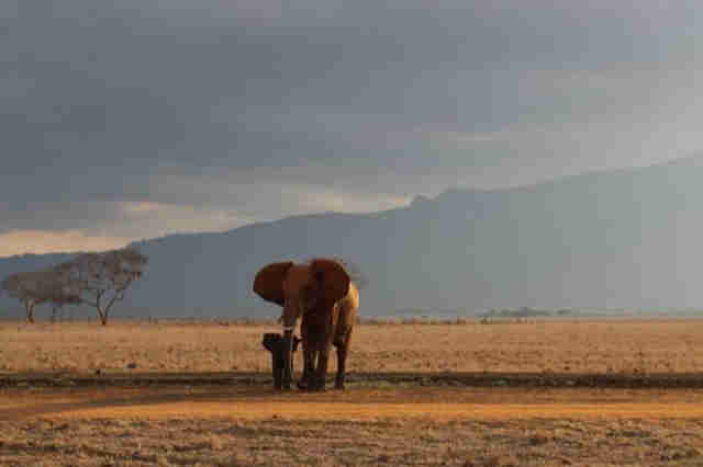 Baby elephant reunited with his mom