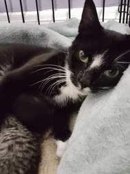 Stray cat saved from streets of Boston