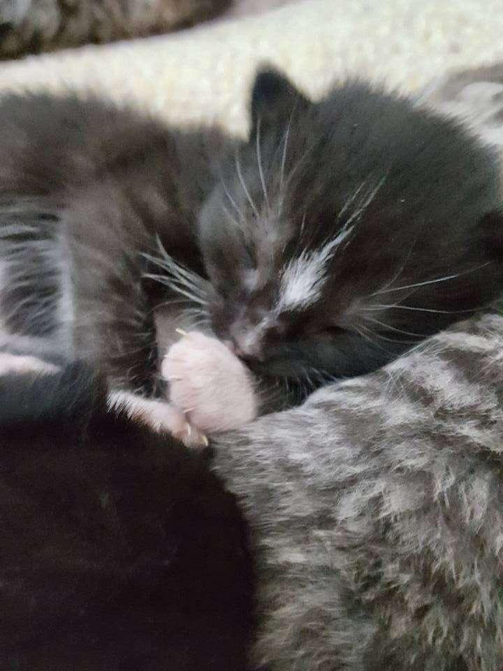 Newborn kitten born to cat saved from streets of Boston