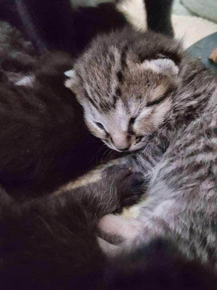 Newborn kitten born to stray mother in Boston