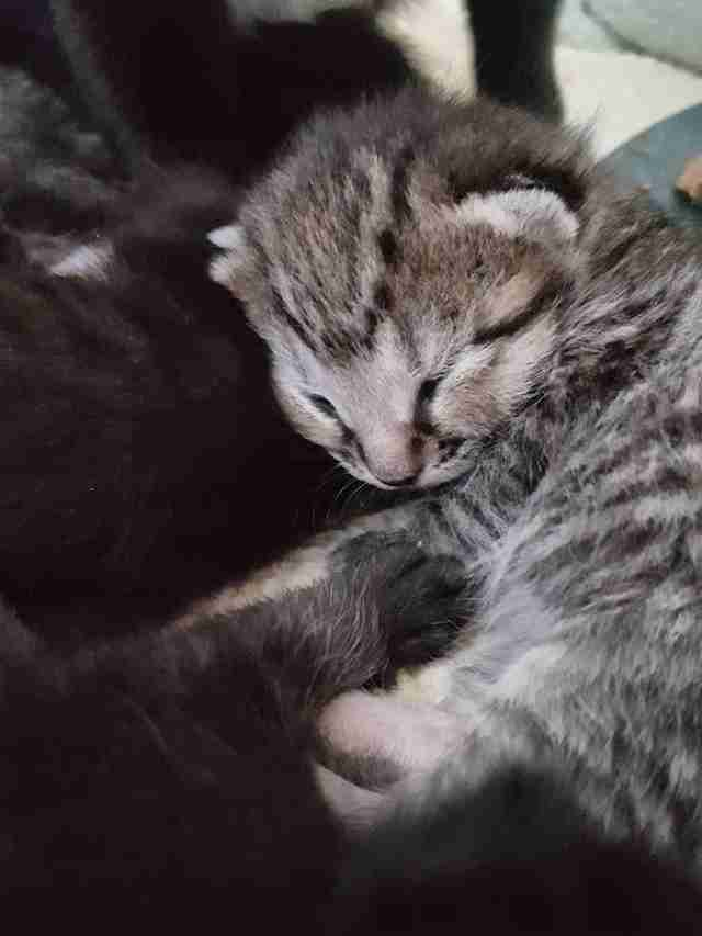 Newborn kitten born to stray mother in Boston