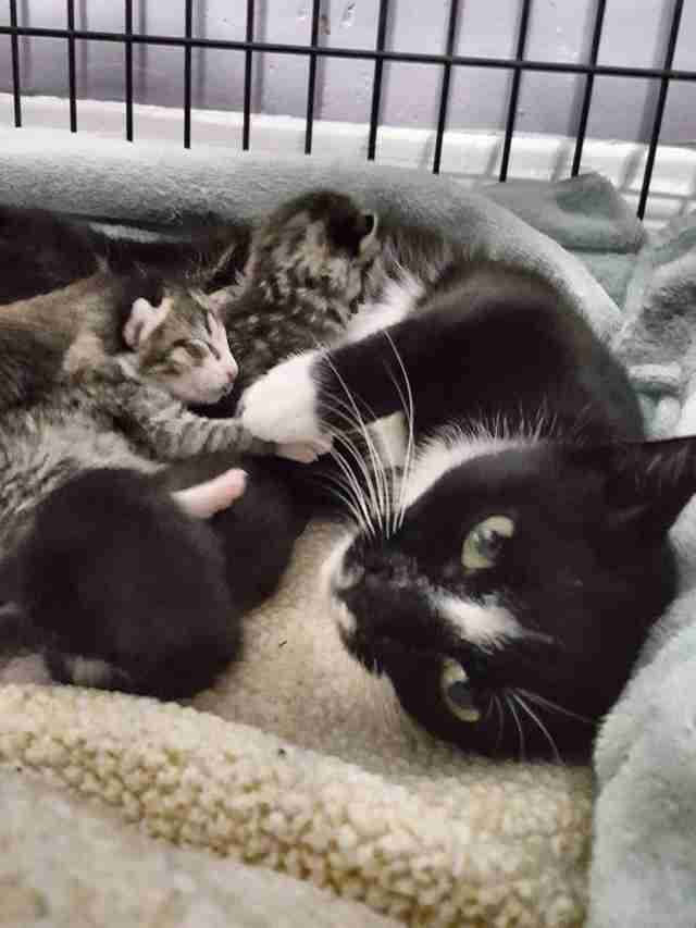 Cat saved from street with her newborn kittens