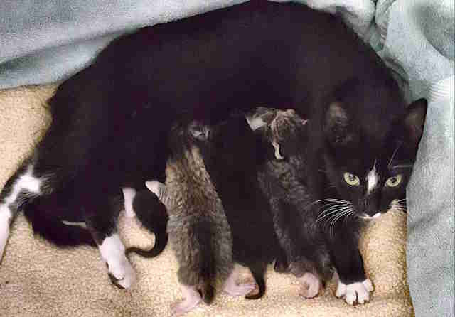 Stray cat with litter of her kittens