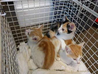 kitten rescued twice in one day