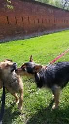 Rescue dogs sniffing each other