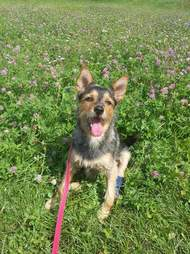 Rescue dog sitting in grass