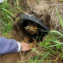 Man holding out hand to injured dog in drain