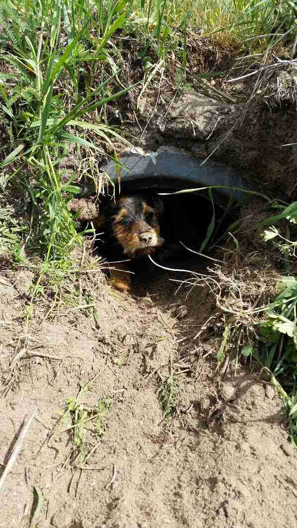 Injured dog in ditch