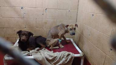 bonded dogs in shelter