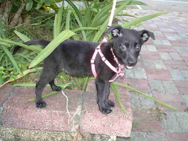 puppy rescued from Taiwan
