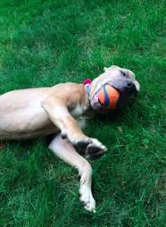 Rescued dog with ball