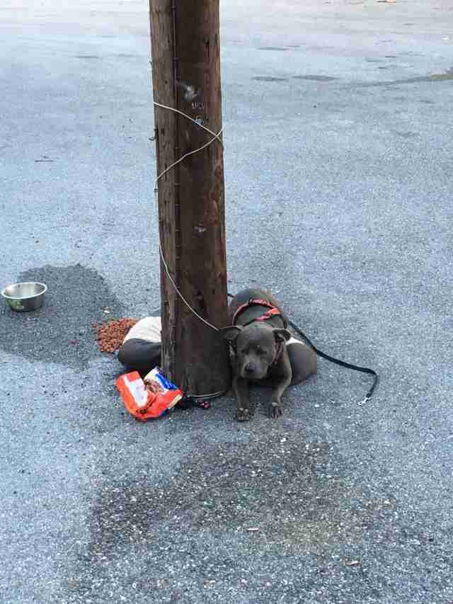 Abandoned dog tied to pole