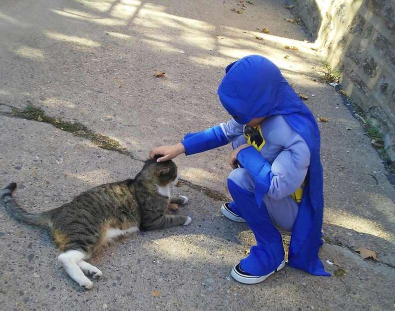 Boy in superhero outfit feeding cats