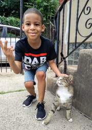 Little boy petting street cat