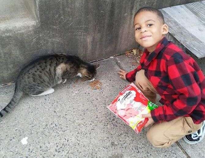 Little boy feeding street cat