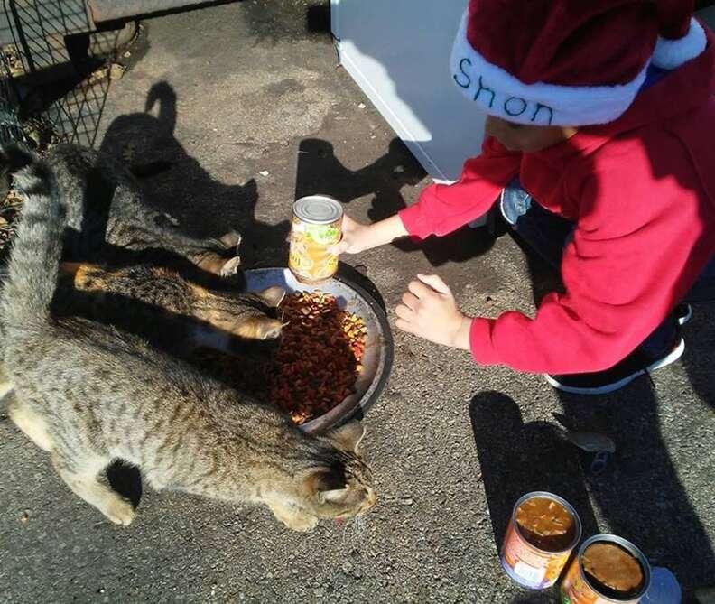 Little boy feeding street cats
