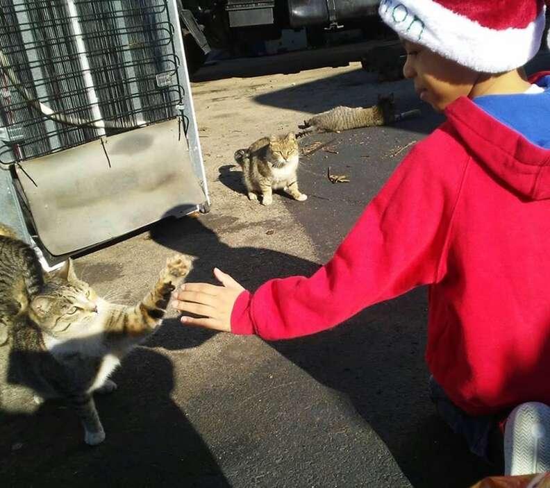 Little boy giving a street cat a high five