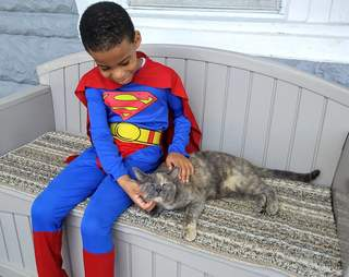 Little boy in costume petting cat