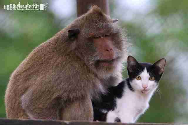 Rescued macaque and stray cat