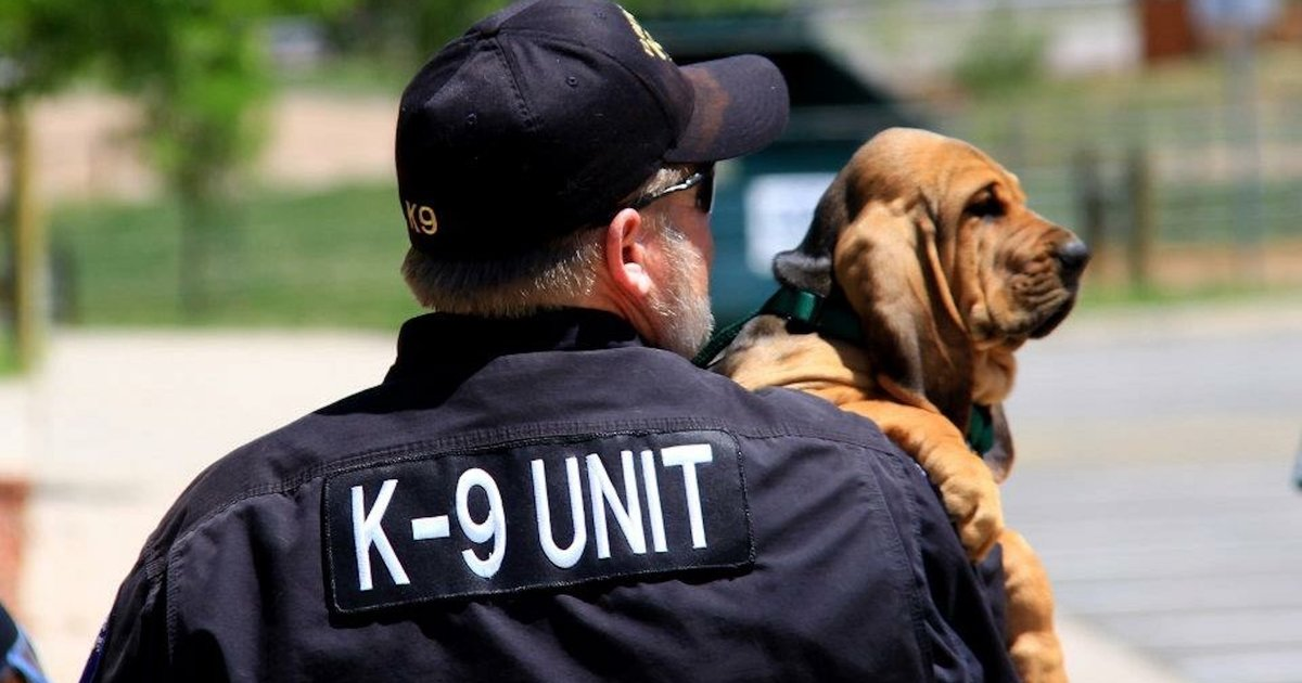 Man Who Lost His K-9 Partner Didn't Think He'd Be Able To Love A Dog That Much Again