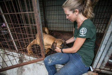 Woman petting rescue dog