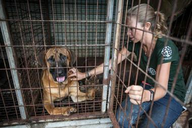 Woman petting dog at meat farm