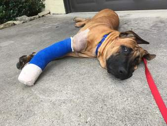 Dog with cast resting