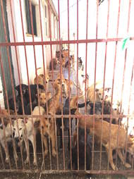 Shelter dogs in Morocco