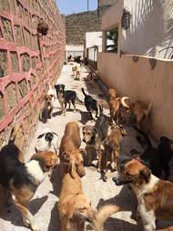 Street dogs in Rabat, Morocco
