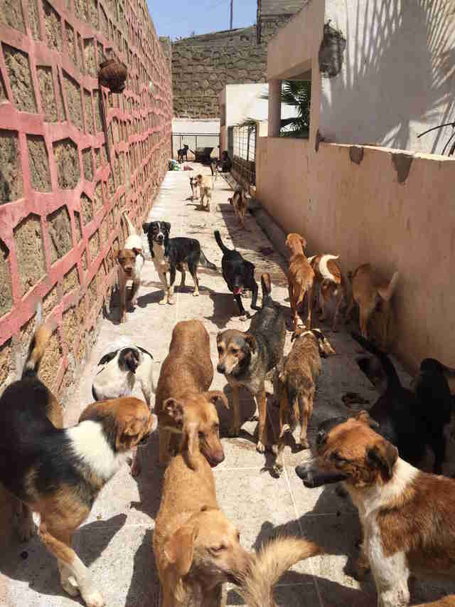 Street dogs in Rabat, Morocco